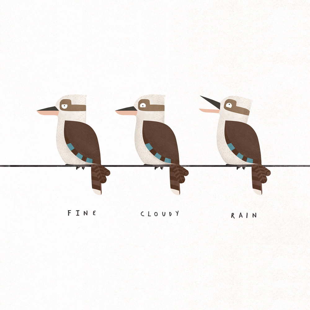Kookaburra illustration | Philip Bunting